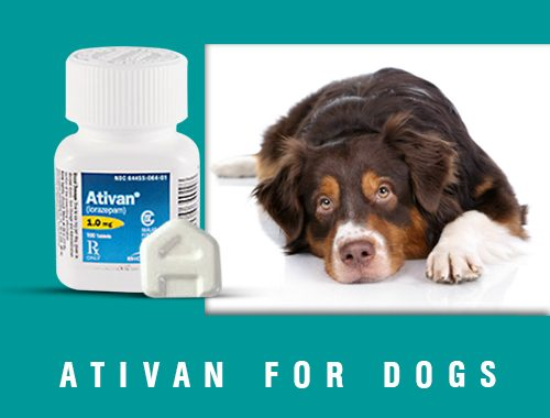 Ativan-For-Dogs