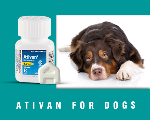 ativan pills box with a dog